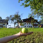 herbst-in-mondsee-ferienhof-gassner-at